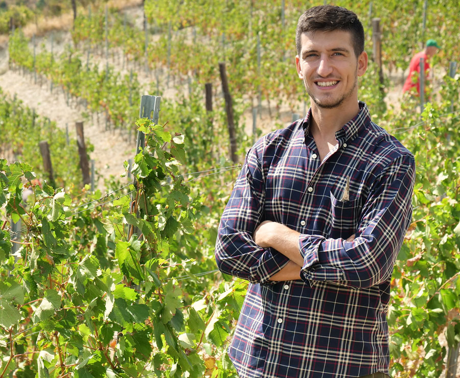 U.S. Expat touring a vineyard harvest in Italy